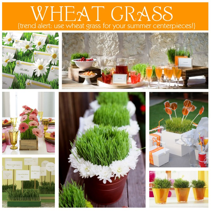 wheatgrass decor ideas